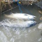 Top Day! Fishing Sockeye in Alaska