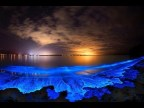 Bioluminescent Lobstering